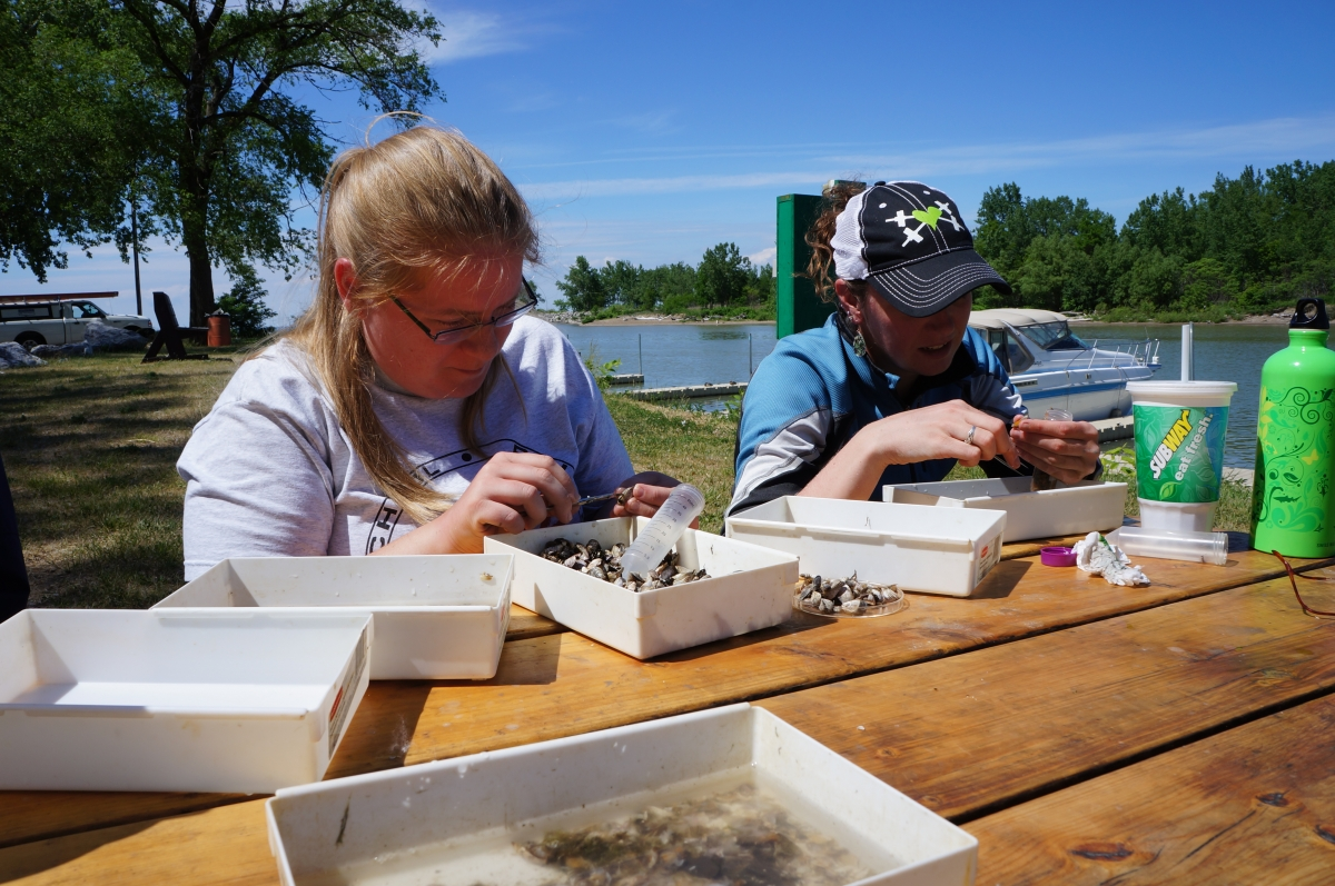 Two people sit at a picnic table and pick through samples in small plastic trays.