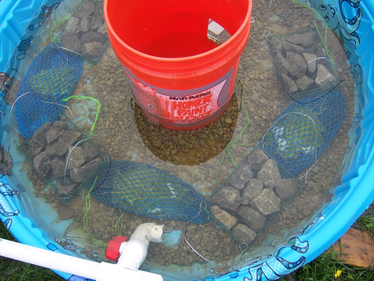 A shallow pool with a bucket in the center. The bottom has gravel and mesh bags with leaves. There is some water in the pool, and a pipe runs along one side.
