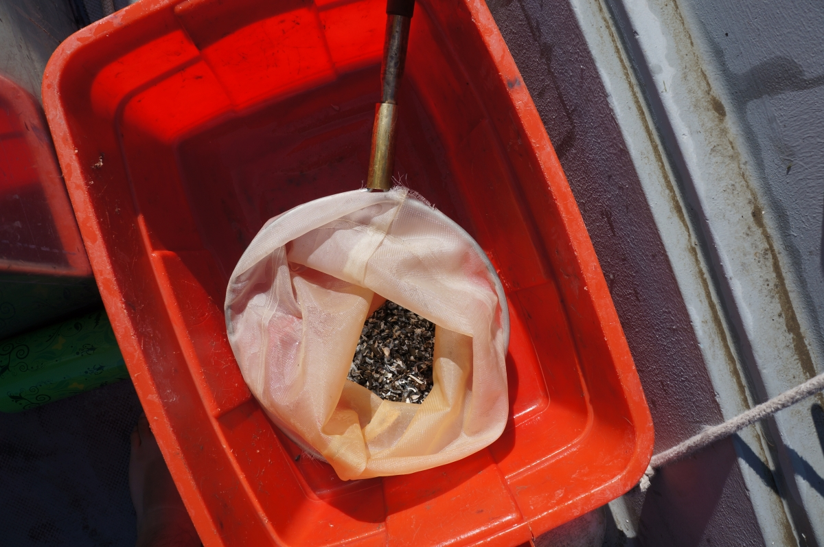 A net in a plastic tub. There are shells in the net.
