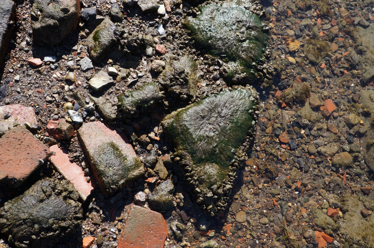 mussels and algae cover rocks and bricks
