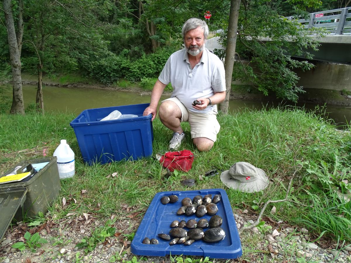A person kneels by a plastic tote by a creek. The tote lid is in front of them with rows of mussels resting on it.