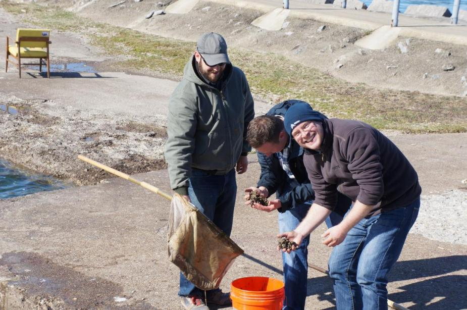 Three people stand near a bucket. One holds a net and two hold clumps of mussels.