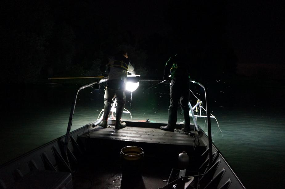 Nighttime picture of two people standing at the edge of a boat holding nets on long poles.