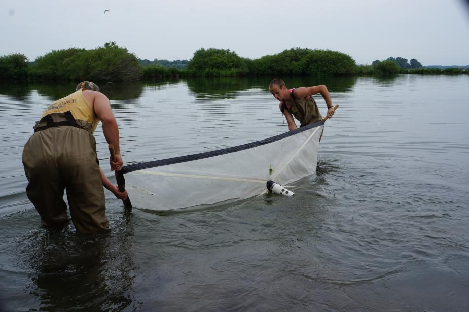 Two people wearing chest waders stand in water and hold opposite ends of an 8 foot long net that they pull through the water