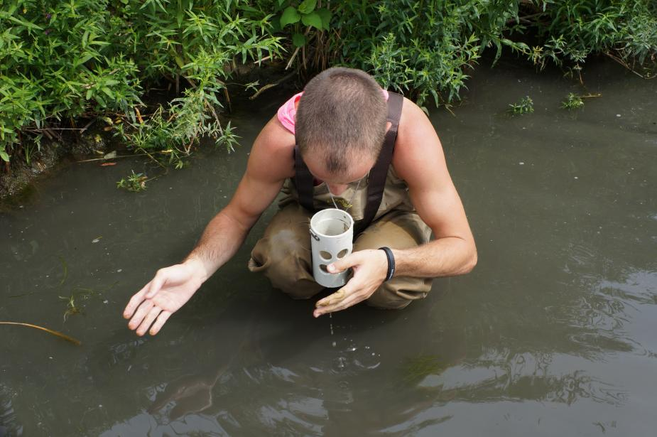 a person wearing chest waders crouches down in shallow water to look closely into a sample cup