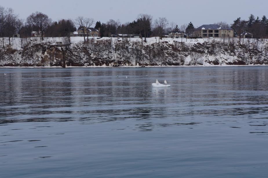 two gulls sitting on a chunk of ice in the river, with the snowy shore behind it