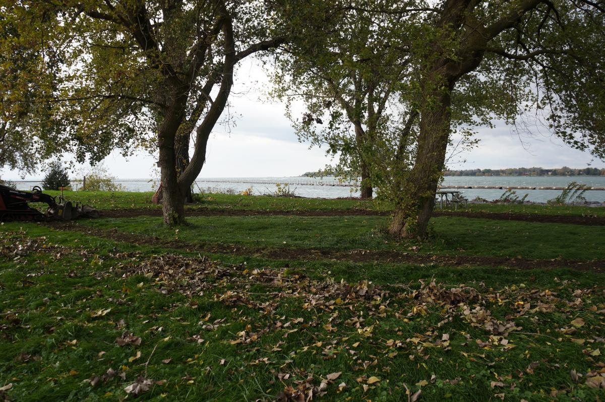 Two trees near the waterfront with a ring of exposed soil surrounding both of them.