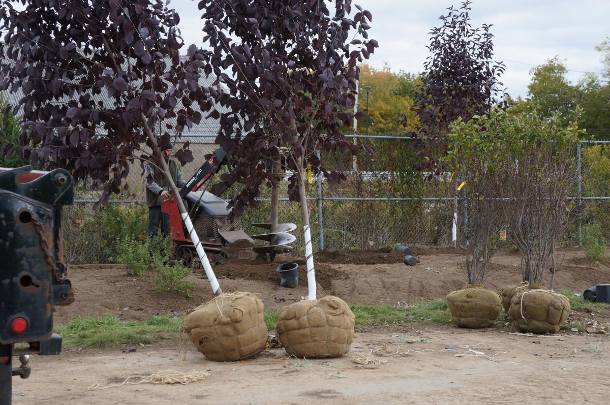 A worker uses a machine with a large auger to drill a hole. There are several trees and bushes nearby, ready to be planted.