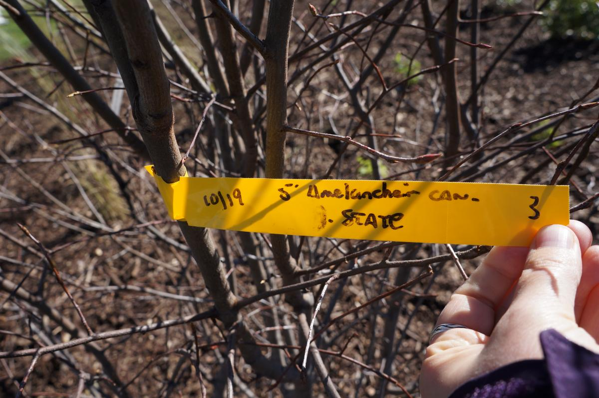 A hand holding a tag that is attached to a branch so it can be read. In handwriting it says