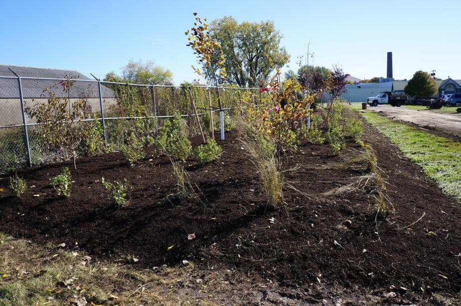 A long rectangular mulched bed with plants and trees.