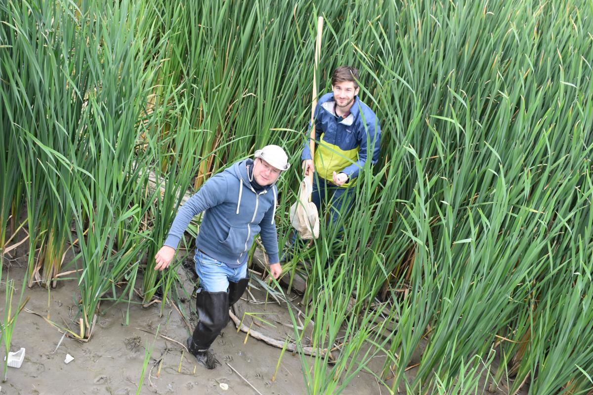 Two people wearing tall boots stand in tall wetland grasses. One has a net on a long pole.