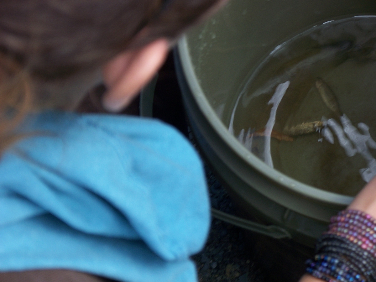 A person looks at fish in a bucket.