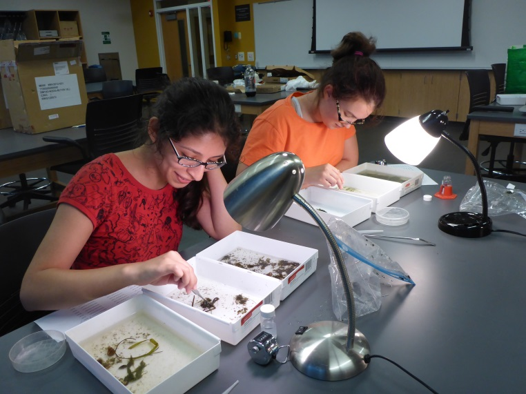 Two people work on samples in white trays in a lab. Desk lamps help light the work area.