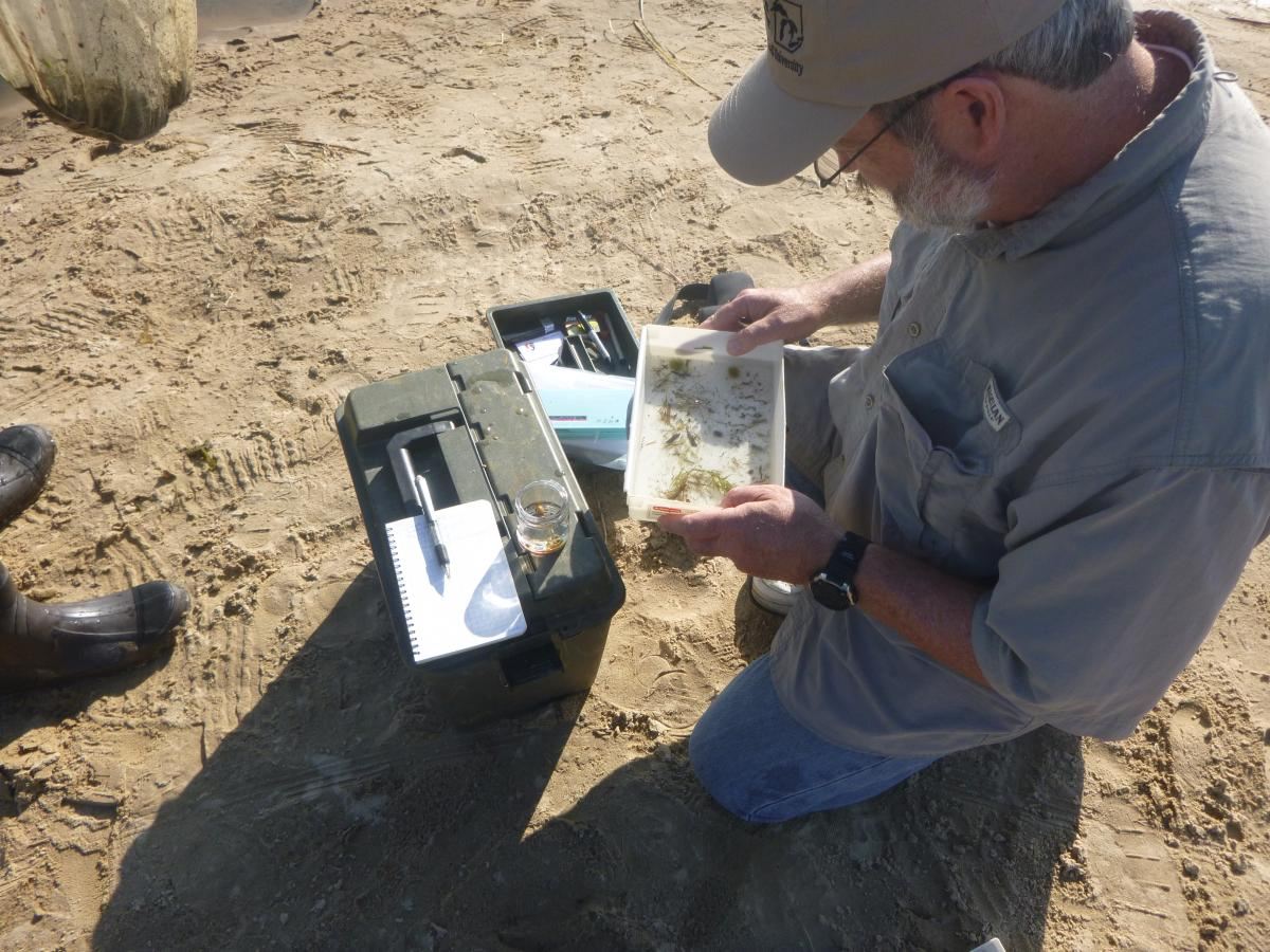 A person kneeling on the sand and looking in a plastic pan with some water and weeds in it. There is a tacklebox, a notebook, and an open jar by them.
