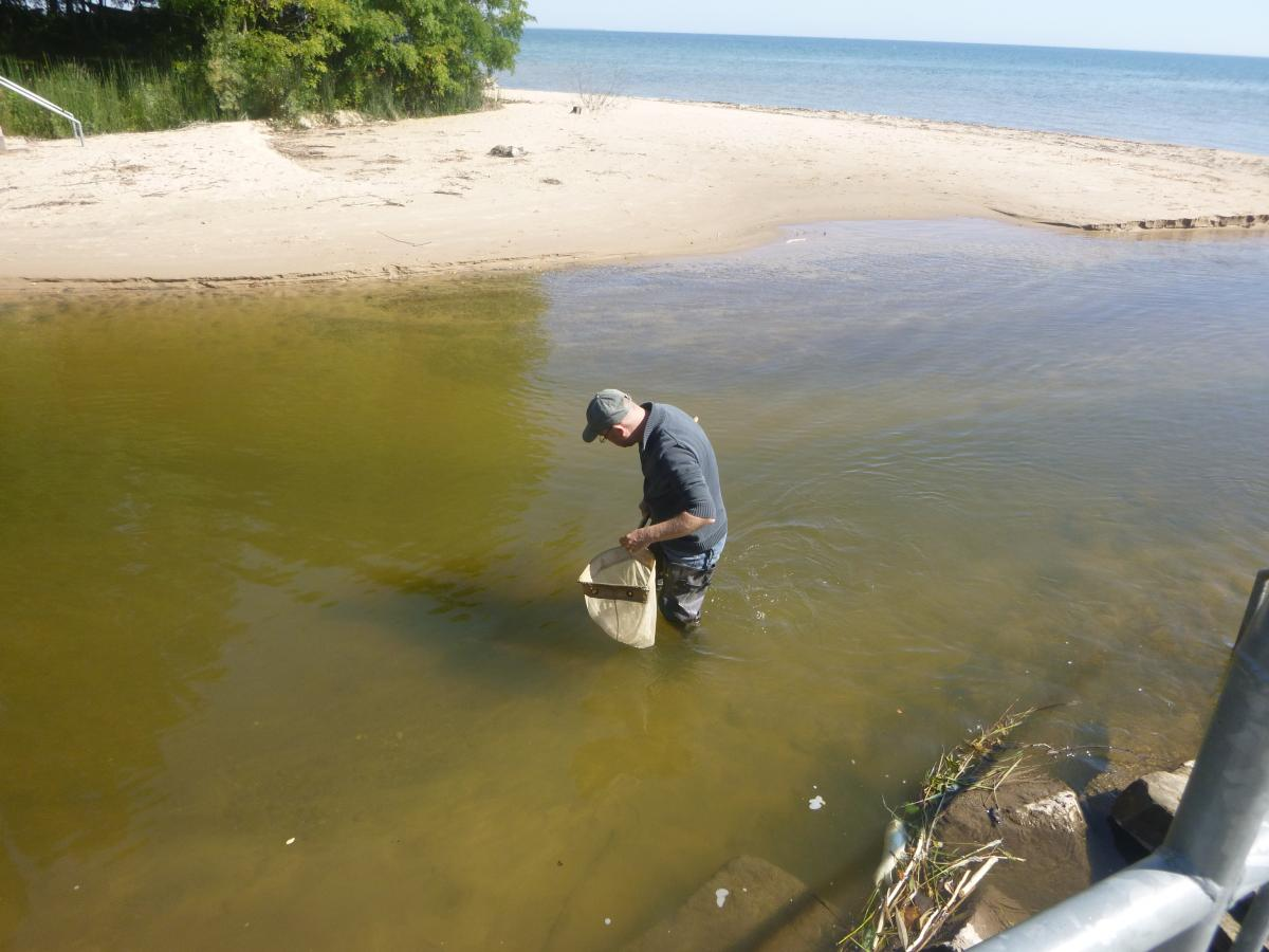 A person wading in deep water near a beach, holding a net.