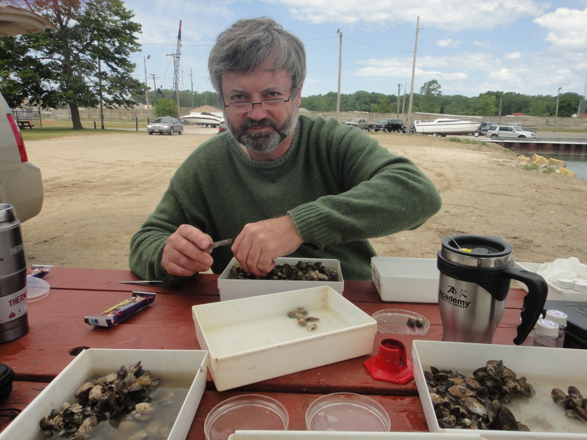 A person works at a picnic table with small plastic trays with small mussels in them