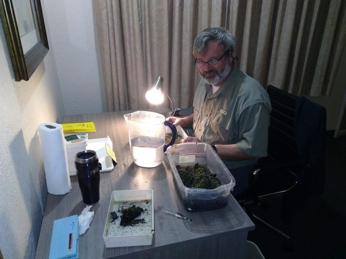 A person works at a small desk with samples of aquatic organisms in trays.