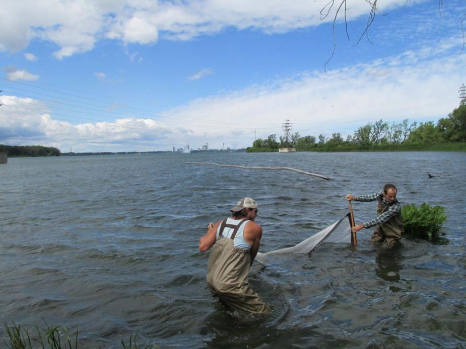 Two people wading in the water, pulling a net between them