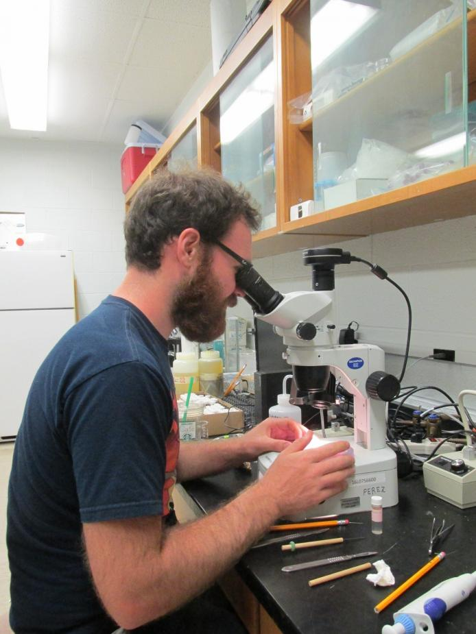 A person sitting at a microscope in a lab.