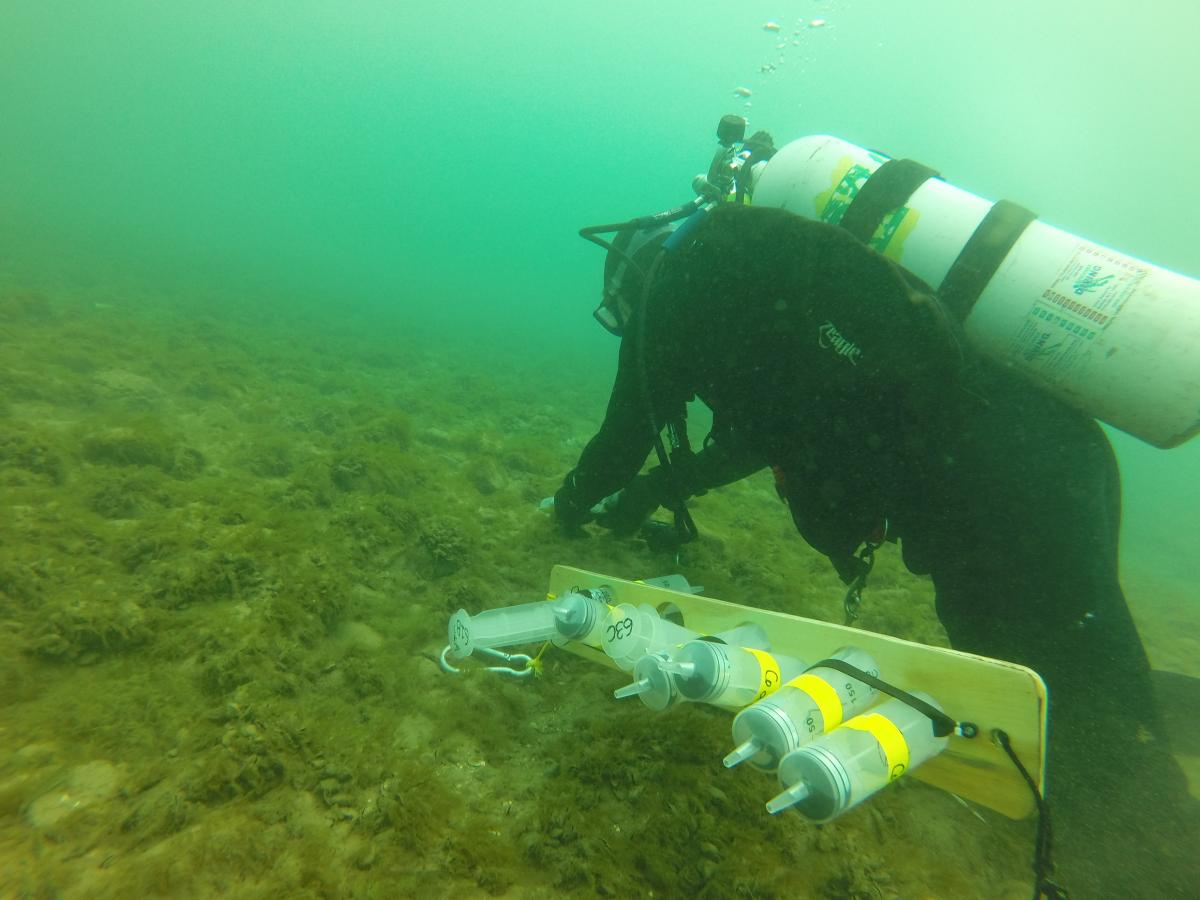 A diver works on the bottom of a lakebed covered in algae. There are several large syringes strapped together on a board next to them.