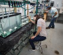 Two people in a lab looking at aquariums with small fish in them on a shelf.