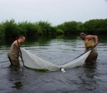 Two people wearing chest waders stand in water and hold opposite ends of an 8 foot long net that they strain through the water. Weeds are collecting in the net at the surface of the water.