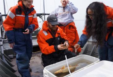 Students examining a brown bullhead