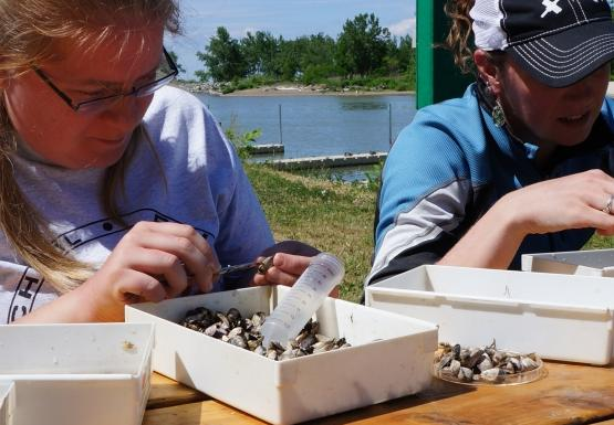 Two people sit at a picnic table and pick through samples in small white trays.