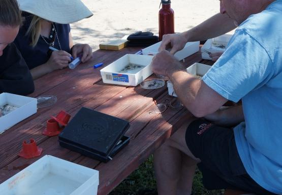 Four people sit at a picnic table, working on samples in small white trays.