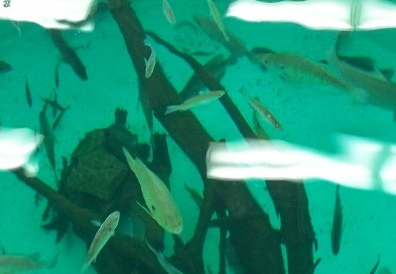 Looking down into a large round aquarium full of fish and a log
