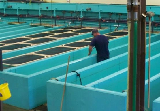 A room full of large rectangular fiberglass fish tanks. The tanks appear to be empty. One person stands in between two of the tanks