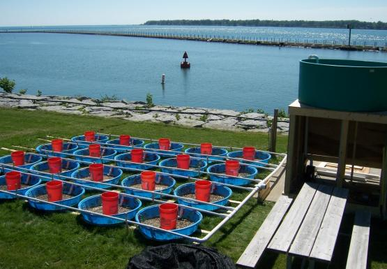 pools with gravel and buckets in them, connected by pipes to a structure with a tank on top of it. There is a body of water behind them.