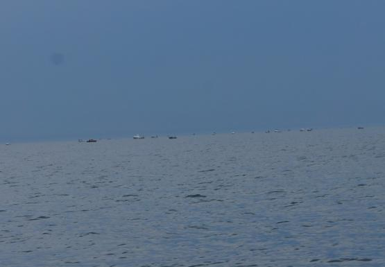 twenty or more boats on the water with no land on the horizon