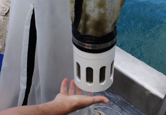 A person holds up the bottom of a conical net to show that the jar at the bottom and part of the net are full of something green or brown. They are on a boat.