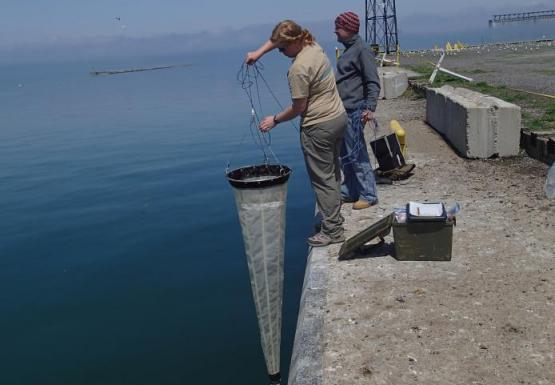 Two people stand at the edge of a wall near the water. One lowers a very long conical net into the water.