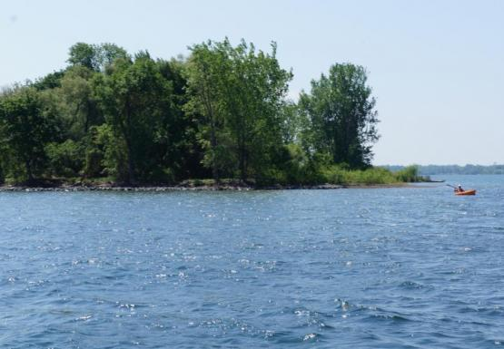 Trees on land next to some blue water. A person in a kayak is nearby.