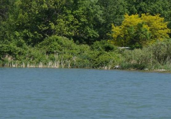 The habitat on the Niagara River is natural in some places