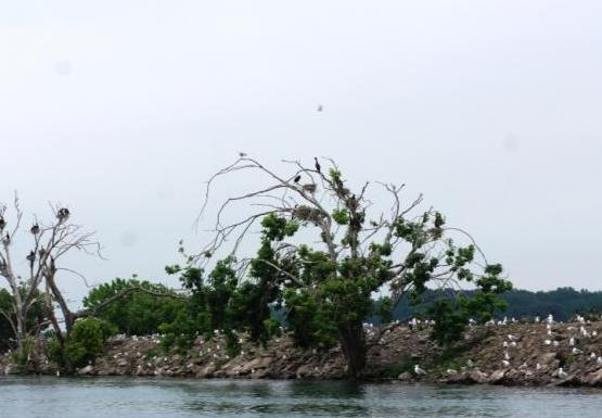 White birds and black birds sitting on the rocky shore with some stunted trees.