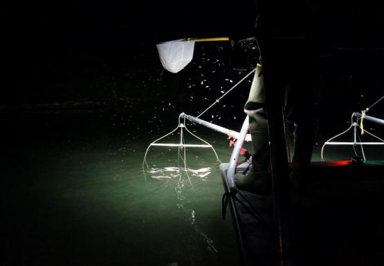 A picture of the edge of a boat at night. A spotlight shines on a metal device hanging in the water, and a person is standing at the edge of a boat holding a net.