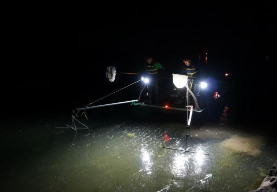Nighttime picture of a boat with headlights on the water, and two people dipping nets on long poles into the water