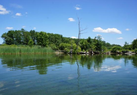A wetland with tall grasses and trees behind it. The water is blue and reflects the sky.