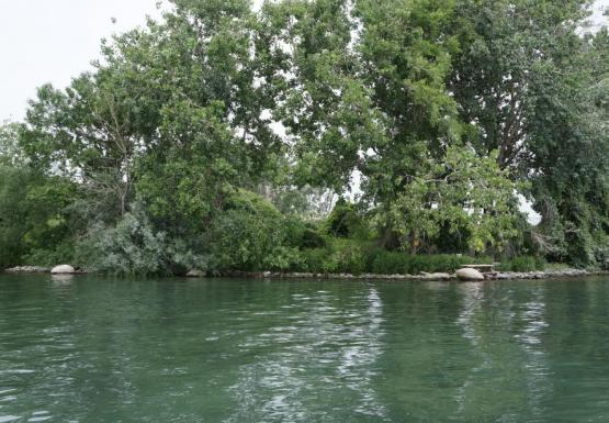 trees along the shore of green water