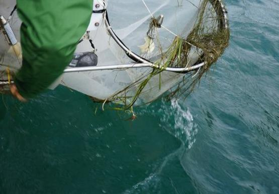 A person leans over the water and pulls in two cylindrical nets that have weeds caught on them
