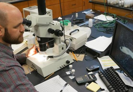 a person sits at a microscope and looks at an image of a fish on the screen next to it