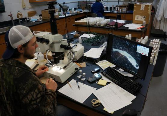 A person in a lab sits in front of a microscope and looks at a monitor with a fish displayed on it.