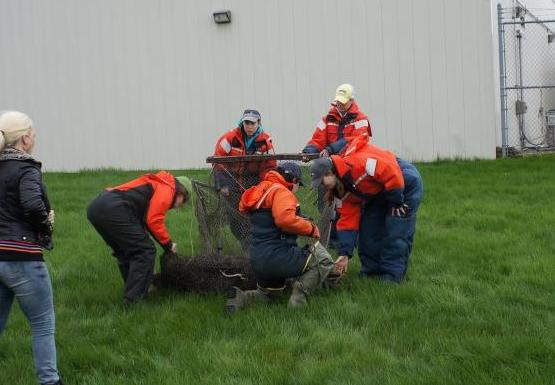 Students in orange float suits unfold a box-shaped trap net on land. A white building is in the background.