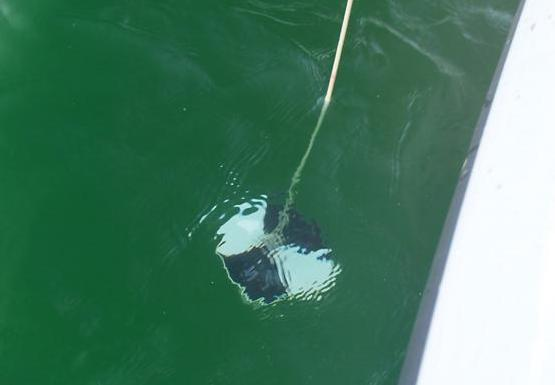 A black and white patterned disk hanging from a rope into green water.