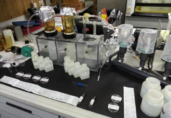 A lab bench with bottles and filter flasks.