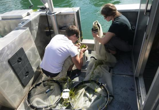 One person holds a net with a plastic bucket on the back deck of a boat while a second person crouches down to look through the contents of a net.