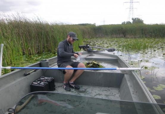 A person sitting in the front of a boat putting something in a plastic bag. There is a pile of weeds next to them, and a long pole is balanced across the boat. There are reeds behind them.